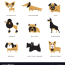 different dogs breeds characters set of