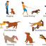 10 common dog behavior problems and how